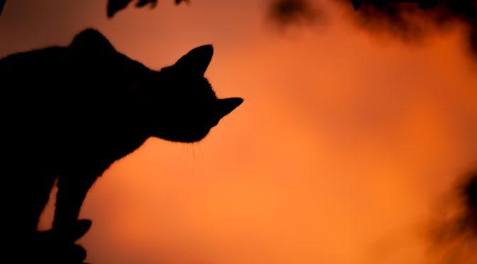 Tessa Korber – Die Katzen von Montmartre